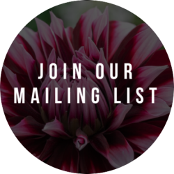 Join Our Mail List | Kopf Consulting